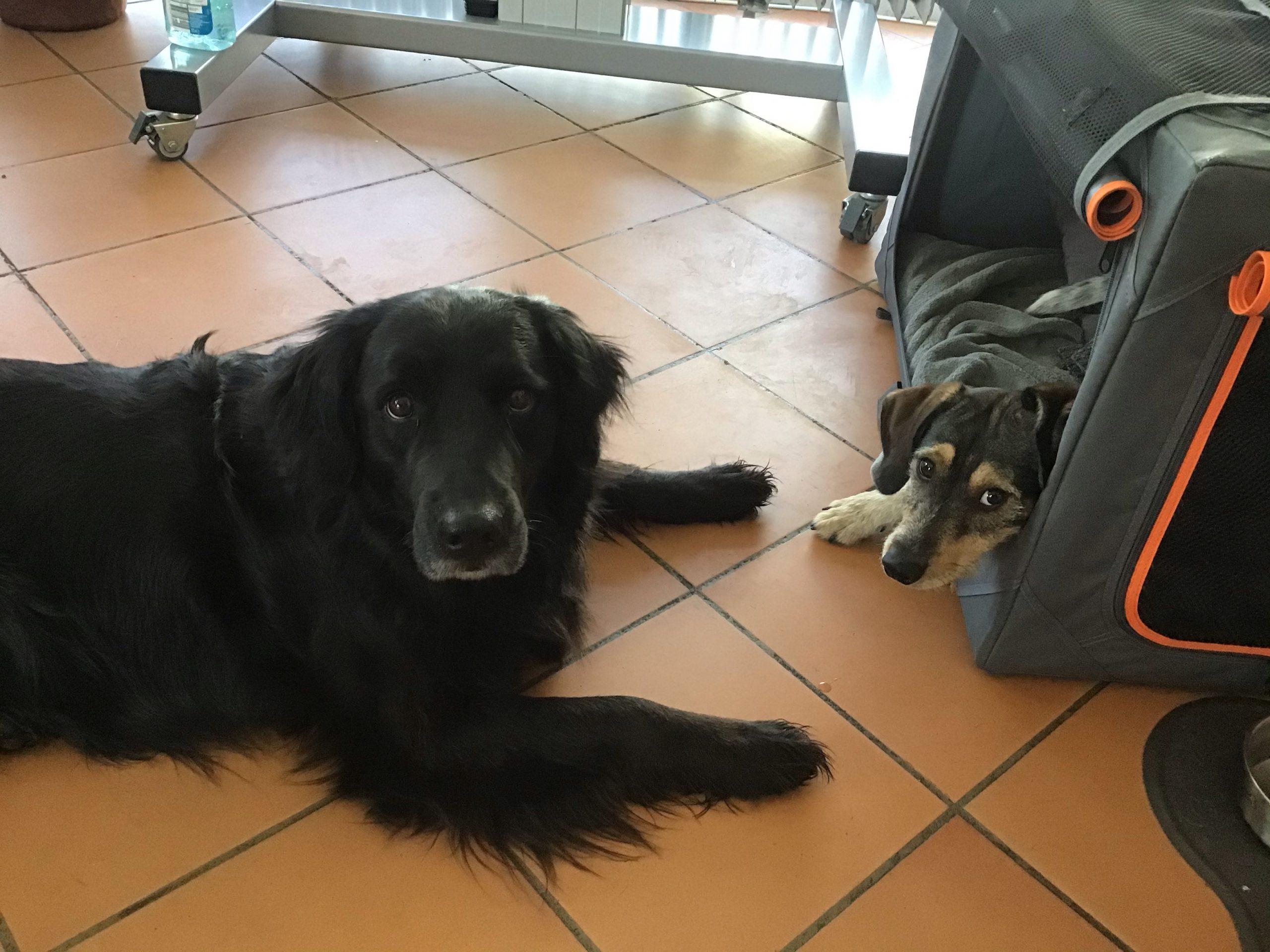 Schulhund-Freundschaft